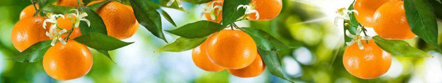 Изображение для стеклянного кухонного фартука, скинали: листья, фрукты, мандарины, fartux804