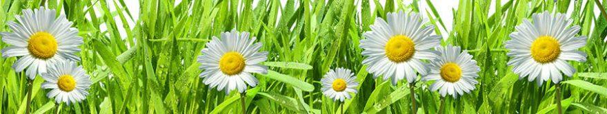 Изображение для стеклянного кухонного фартука, скинали: цветы, трава, ромашки, fartux819