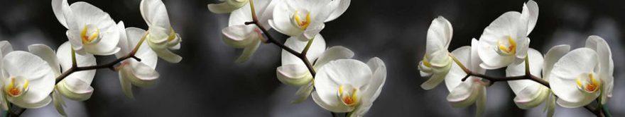 Изображение для стеклянного кухонного фартука, скинали: цветы, орхидеи, fartux832