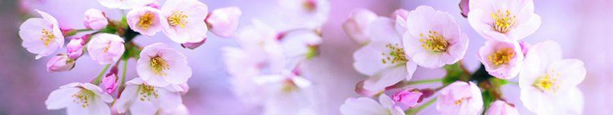 Изображение для стеклянного кухонного фартука, скинали: цветы, яблоня, fartux843