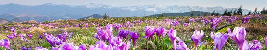 Изображение для стеклянного кухонного фартука, скинали: цветы, поле, природа, крокусы, fartux847