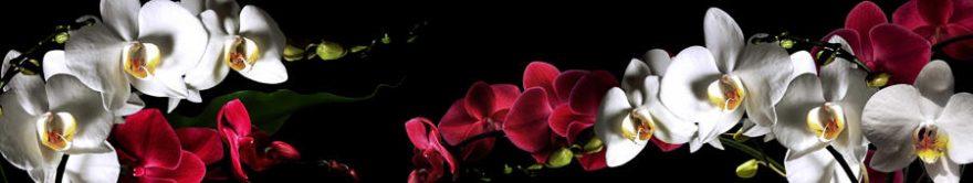 Изображение для стеклянного кухонного фартука, скинали: цветы, орхидеи, fartux889