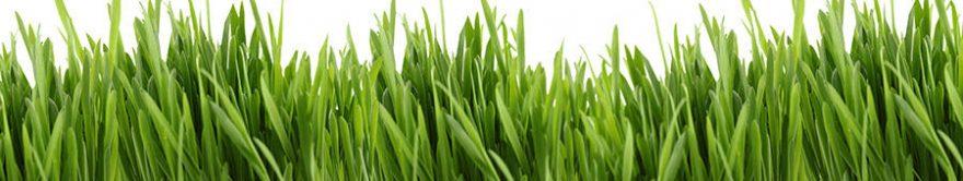 Изображение для стеклянного кухонного фартука, скинали: трава, fartux896