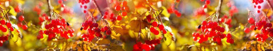 Изображение для стеклянного кухонного фартука, скинали: ягоды, ветки, fartux905