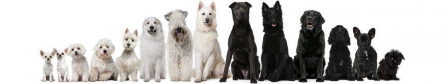 Изображение для стеклянного кухонного фартука, скинали: животные, собаки, fartux926
