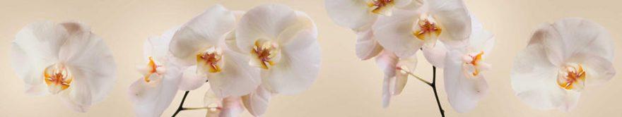 Изображение для стеклянного кухонного фартука, скинали: цветы, орхидеи, fartux927
