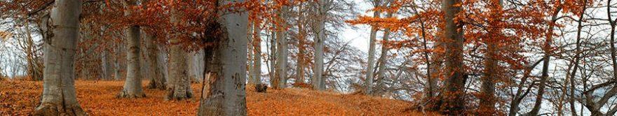 Изображение для стеклянного кухонного фартука, скинали: лес, осень, fartux933