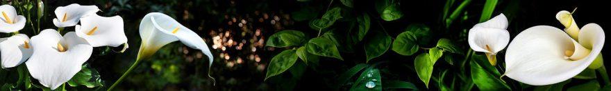 Изображение для стеклянного кухонного фартука, скинали: цветы, каллы, fartux976