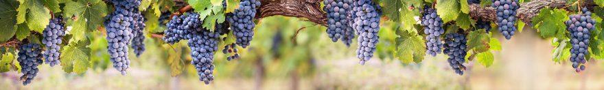 Изображение для стеклянного кухонного фартука, скинали: виноград, fartux978