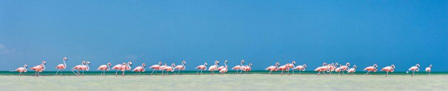 Изображение для стеклянного кухонного фартука, скинали: небо, фламинго, птицы, jivdiki001
