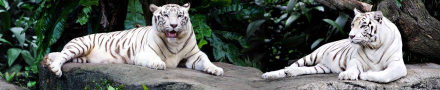 Изображение для стеклянного кухонного фартука, скинали: животные, тигры, jivdiki006