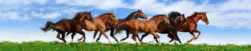 Изображение для стеклянного кухонного фартука, скинали: природа, небо, животные, лошади, jivdoma001