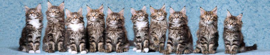 Изображение для стеклянного кухонного фартука, скинали: животные, кошки, jivdoma002