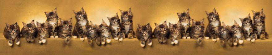 Изображение для стеклянного кухонного фартука, скинали: животные, кошки, jivdoma003