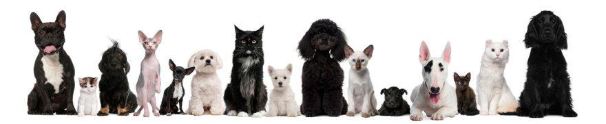 Изображение для стеклянного кухонного фартука, скинали: животные, кошки, собаки, jivdoma006