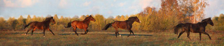 Изображение для стеклянного кухонного фартука, скинали: природа, лес, осень, животные, лошади, jivdoma008