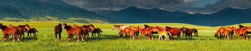 Изображение для стеклянного кухонного фартука, скинали: поле, горы, животные, лошади, jivdoma009