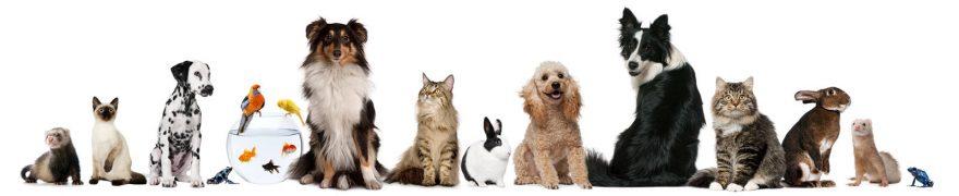 Изображение для стеклянного кухонного фартука, скинали: животные, кошки, собаки, jivdoma010