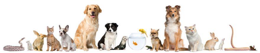 Изображение для стеклянного кухонного фартука, скинали: животные, кошки, собаки, jivdoma011