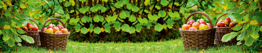 Изображение для стеклянного кухонного фартука, скинали: листья, корзина, фрукты, яблоки, ovofruk017