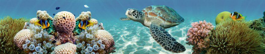 Изображение для стеклянного кухонного фартука, скинали: рыбы, подводный мир, кораллы, черепаха, podvmir002