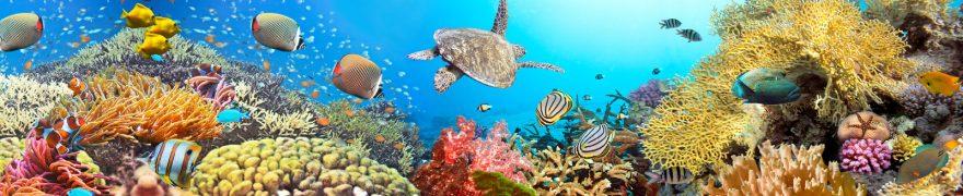 Изображение для стеклянного кухонного фартука, скинали: рыбы, подводный мир, кораллы, черепаха, podvmir003