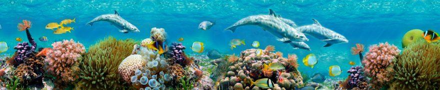 Изображение для стеклянного кухонного фартука, скинали: рыбы, подводный мир, кораллы, дельфины, podvmir004