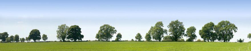 Изображение для стеклянного кухонного фартука, скинали: поле, природа, небо, деревья, polholm005