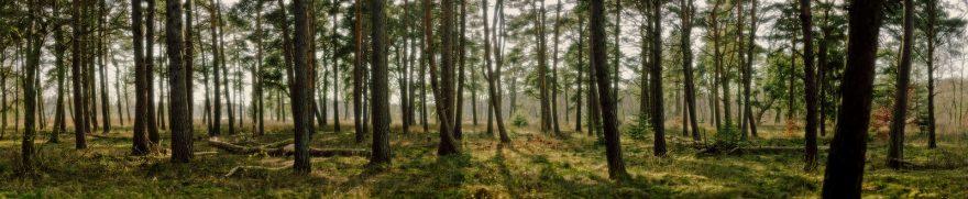 Изображение для стеклянного кухонного фартука, скинали: природа, деревья, лес, polholm006
