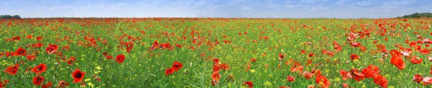 Изображение для стеклянного кухонного фартука, скинали: цветы, поле, природа, маки, rastcve004