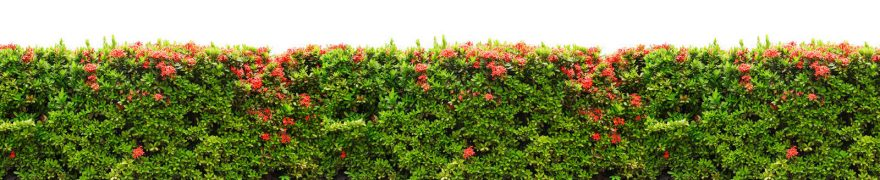 Изображение для стеклянного кухонного фартука, скинали: цветы, кусты, rastcve007