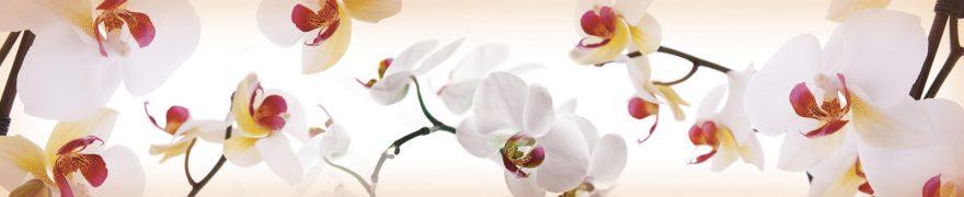 Изображение для стеклянного кухонного фартука, скинали: цветы, орхидеи, rastcve010