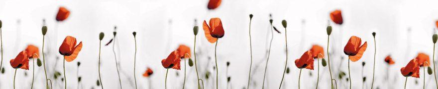 Изображение для стеклянного кухонного фартука, скинали: цветы, маки, rastcve011