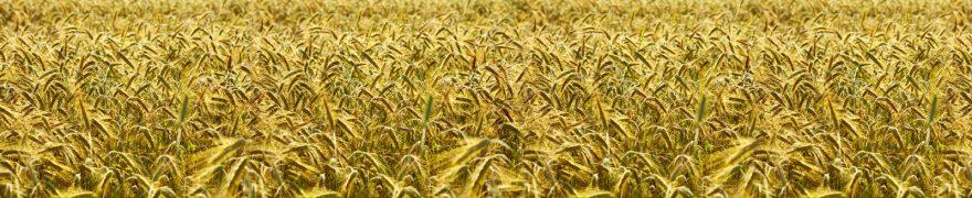 Изображение для стеклянного кухонного фартука, скинали: поле, пшеница, rastcve012