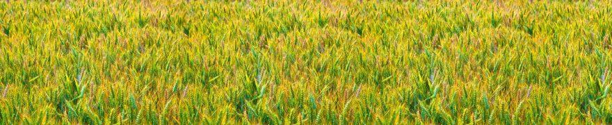 Изображение для стеклянного кухонного фартука, скинали: поле, пшеница, rastcve014