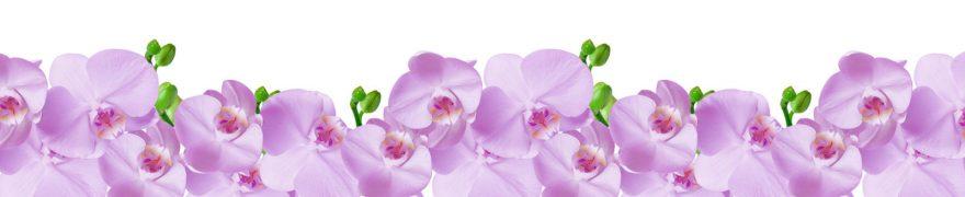 Изображение для стеклянного кухонного фартука, скинали: цветы, орхидеи, rastcve016