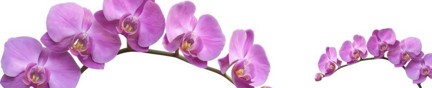 Изображение для стеклянного кухонного фартука, скинали: цветы, орхидеи, rastcve017