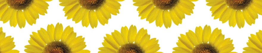 Изображение для стеклянного кухонного фартука, скинали: цветы, подсолнухи, rastcve024