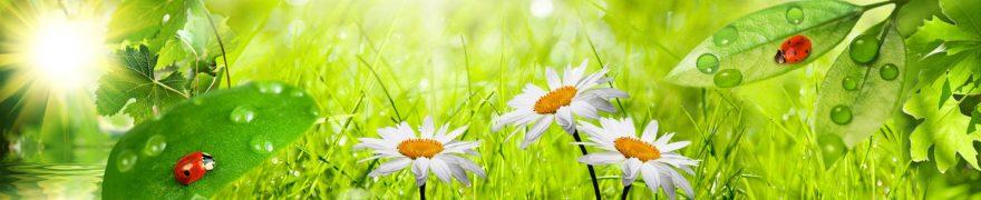 Изображение для стеклянного кухонного фартука, скинали: цветы, трава, роса, ромашки, rastcve026
