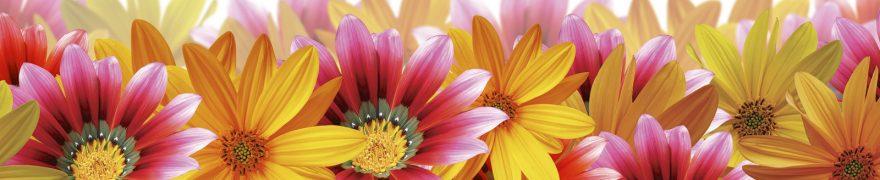 Изображение для стеклянного кухонного фартука, скинали: цветы, герберы, rastcve028
