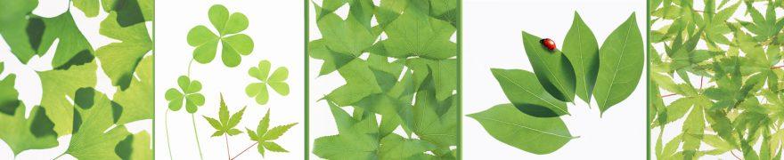 Изображение для стеклянного кухонного фартука, скинали: листья, коллаж, rastcve034