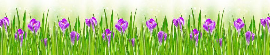 Изображение для стеклянного кухонного фартука, скинали: цветы, трава, крокусы, rastcve046