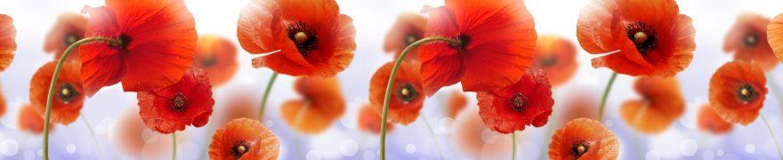Изображение для стеклянного кухонного фартука, скинали: цветы, маки, rastcve054
