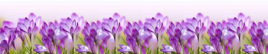 Изображение для стеклянного кухонного фартука, скинали: цветы, крокусы, rastcve060