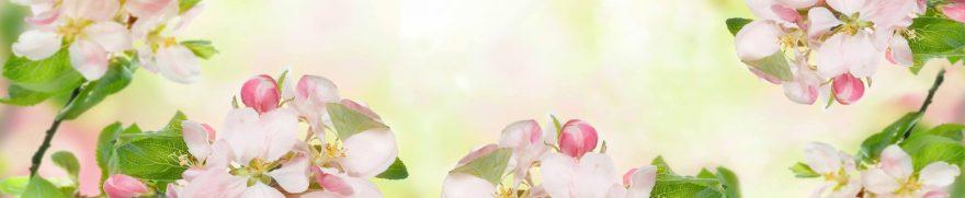 Изображение для стеклянного кухонного фартука, скинали: цветы, яблоня, rastcve061