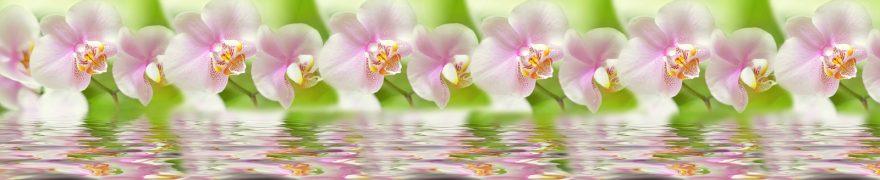 Изображение для стеклянного кухонного фартука, скинали: цветы, орхидеи, rastcve063