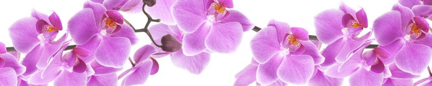 Изображение для стеклянного кухонного фартука, скинали: цветы, орхидеи, skin103