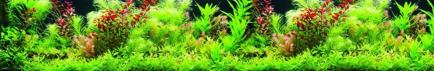 Изображение для стеклянного кухонного фартука, скинали: трава, растение, skin125