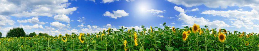 Изображение для стеклянного кухонного фартука, скинали: цветы, поле, подсолнухи, небо, облака, skin188