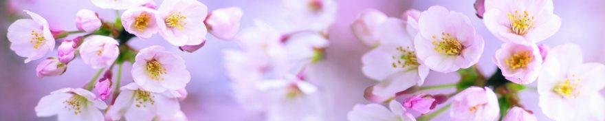 Изображение для стеклянного кухонного фартука, скинали: цветы, яблоня, skin214